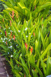 Colorful garden. The white&orange flower in the garden Royalty Free Stock Photos
