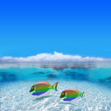 Colorful Gay Fishes. Swimming in Polynesia royalty free stock photos
