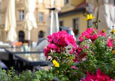 Colorful geranium on the summer terrace of a restaurant, Prague, Czech Republic.  stock images