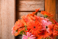 Colorful gerbara flower bouquet on wooden wall Royalty Free Stock Image