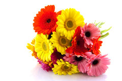 Colorful Gerber bouquet Stock Image