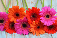 Colorful gerber daisies on a old wooden shelves background with empty copy space Royalty Free Stock Images