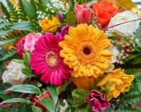 Colorful gerber daisy flower closeup. Natural background Stock Photos