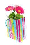 Colorful Gerber plant as present Stock Image