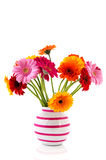 Colorful Gerber in vase Royalty Free Stock Image