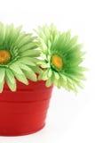 Colorful gerbera daisies Stock Images