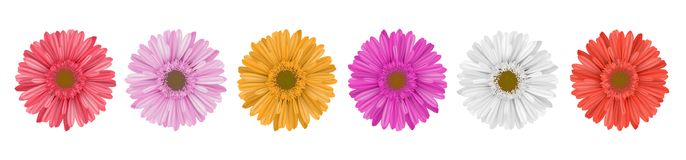 Colorful gerbera daisy flower row for banner. Separate gerbera daisy flower row, for horizontal banner, in different colors. Vector illustration isolated on Stock Images