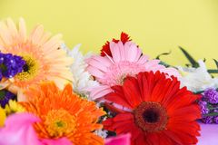Colorful gerbera flower spring summer yellow background stock photo