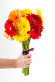 Colorful gerbera flowers bouquet Stock Photos