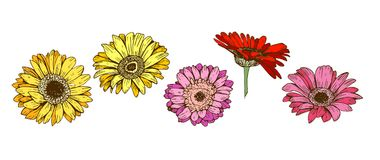 Colorful gerbera flowers isolated on white background. Floral vector. Colorful gerbera flowers isolated on white background. Floral vector Stock Photography