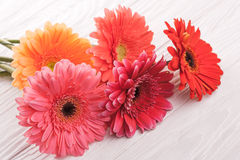 Colorful gerbera flowers on wooden table Stock Photography