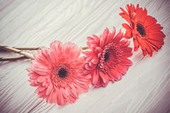 Colorful gerbera flowers on the  wooden table Royalty Free Stock Photography