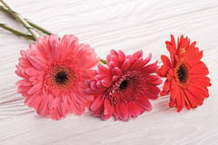 Colorful gerbera flowers on the  wooden table Stock Images