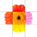 Colorful Gerbera Marigold Flower Mosaic Design Royalty Free Stock Images