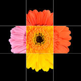 Colorful Gerbera Marigold Flower Mosaic Design Stock Images