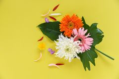 Colorful gerbera spring flowers fresh on green philodendron leaves tropical plant royalty free stock photo