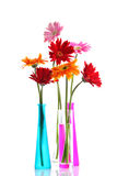 Colorful gerbers flowers Royalty Free Stock Photography