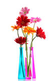 Colorful gerbers flowers Stock Photo