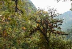 Colorful Gigantic Tree stock image
