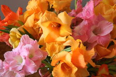 Colorful gladioli Royalty Free Stock Photo