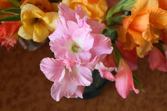 Colorful gladioli Stock Photo