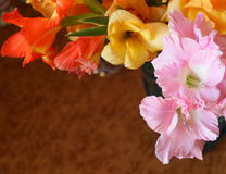 Colorful gladioli Royalty Free Stock Photos