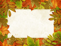 Colorful and golden autumn leaves with old paper card Stock Image