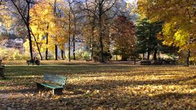 Colorful golden colored trees stock footage