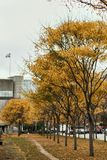 Fall foliage in Montreal, Quebec. Colorful, golden Fall foliage in Old Montreal on a cold and cloudy day.  Quebec, Canada royalty free stock images