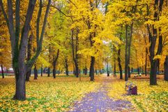 Colorful golden foliage in the autumn park. Stock Image