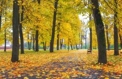 Colorful golden foliage in the autumn park. Royalty Free Stock Photography