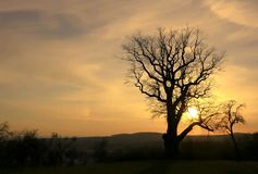 Colorful golden sunset at the old oak. Winter evening at the old oak in golden colors. Photo was taken in the near of Nordhausen, Thuringia, Germany Stock Image