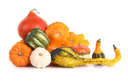 Colorful gourd family. Royalty Free Stock Images