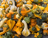 Colorful Gourds Royalty Free Stock Photos