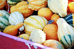 Colorful Gourds Royalty Free Stock Photo
