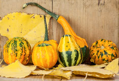 Colorful gourds Stock Images