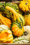 Colorful gourds in Autumn. Colorful gourds of different sizes in Autumn Royalty Free Stock Images