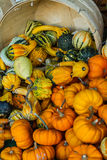Colorful Gourds. Of different sizes on a bushel Royalty Free Stock Photos