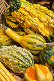Colorful Gourds. Of different sizes on woven bamboo Royalty Free Stock Photos