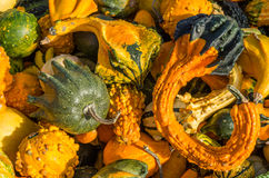 Colorful gourds on display at the market Royalty Free Stock Images