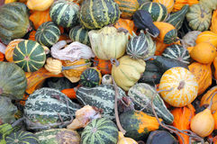 Colorful gourds. royalty free stock photos
