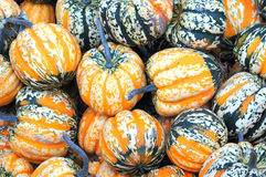 Colorful gourds. Stock Image