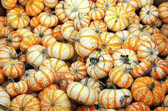 Colorful gourds. stock images