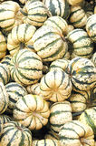 Colorful gourds. stock photos