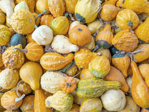 Colorful Gourds Stock Photography