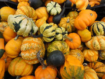 Colorful gourds and pumpkins Royalty Free Stock Image