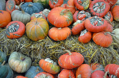 Colorful gourds and pumpkins Stock Photo