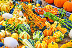Colorful Gourds. Squash and pumpkins royalty free stock photo