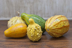 Colorful Gourds stock photos