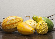 Colorful Gourds Royalty Free Stock Images